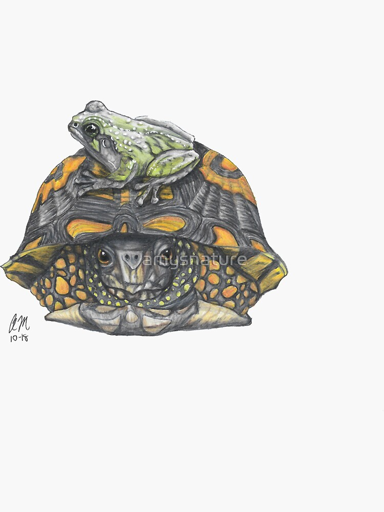 Frog On Turtle by amysnature
