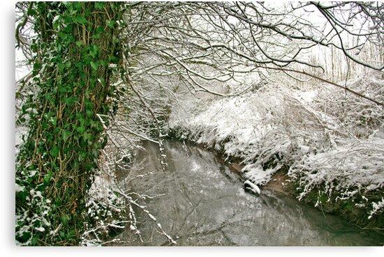 """Winter's Green"" by Bradley Shawn  Rabon"