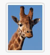 Giraffe Cushion Sticker