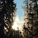 Sun Rising Through The Frosty Trees by MaeBelle