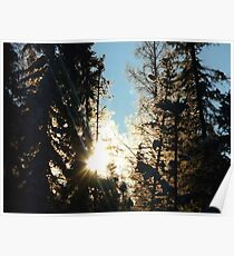 Sun Rising Through The Frosty Trees Poster