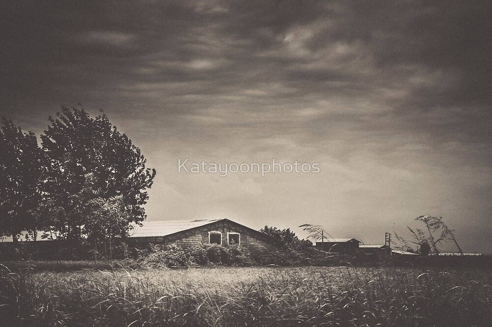 When The Wind Blows by Katayoonphotos