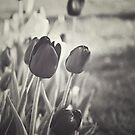 When Spring Was Here BW by Katayoonphotos