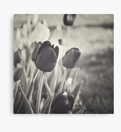 When Spring Was Here BW Canvas Print