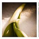 Tulip trio. by Laura Cutmore