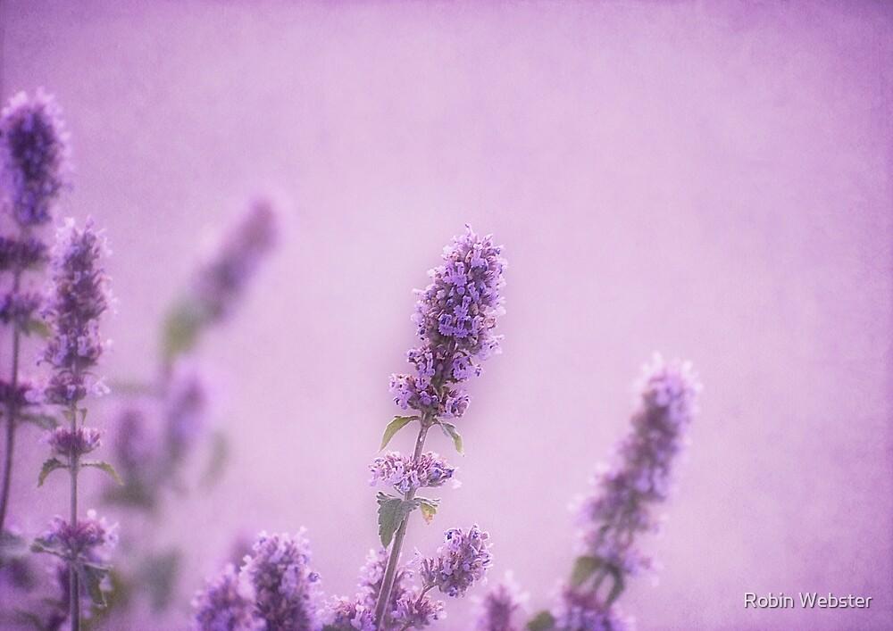 Like a Warm Soft Summer Breeze by Robin Webster