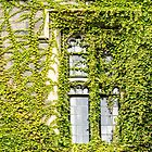 Of Windows and Leaves - Ivy Covered by Georgia Mizuleva