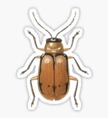 Neobrotica melanocephala Sticker