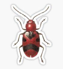 Malacorhinus irregularis Sticker