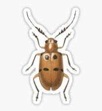 Malacorhinus antennatus Sticker