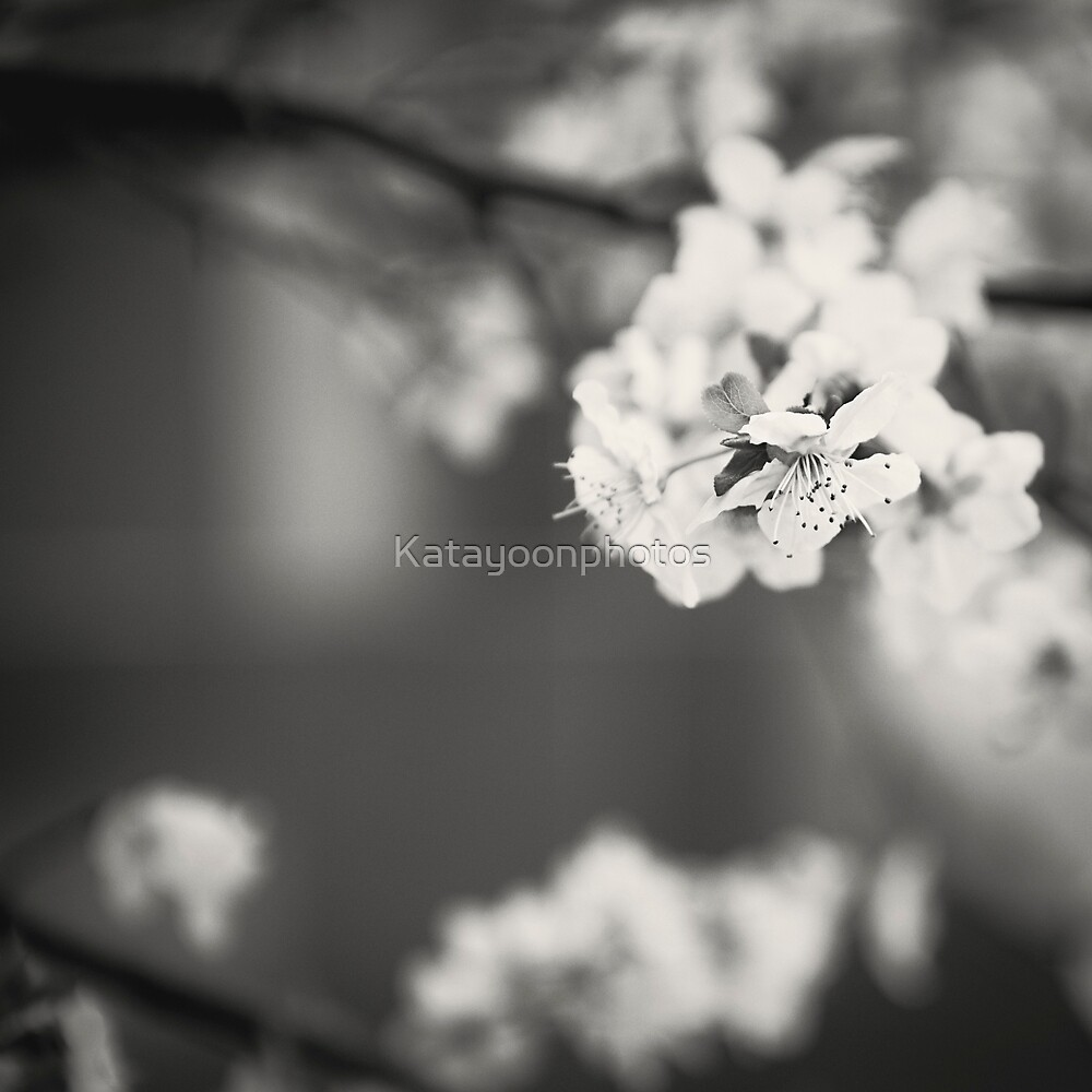 White Floret (B/W) by Katayoonphotos