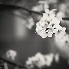 White Floret (B/W) by Katayoonphotos
