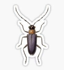 Chthoneis dilaticornis Sticker
