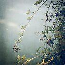 Wild Berries by Katayoonphotos