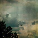 Flying Higher by Katayoonphotos