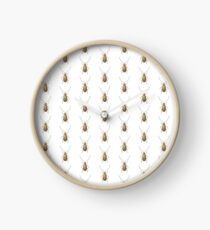Microbrotica subglabrata Clock