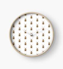 Neobrotica semicostata Clock