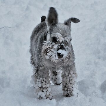 Playing in the snow by spottydog06