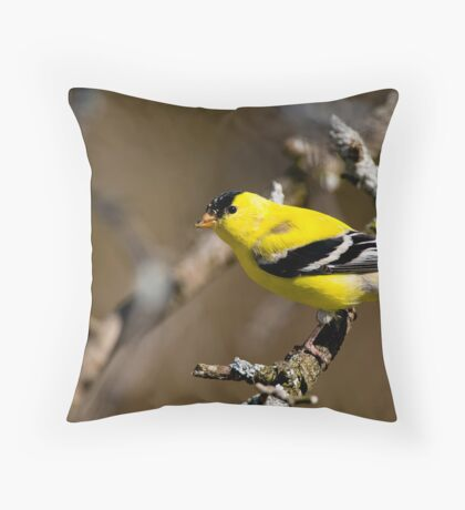 Male Gold Finch, Ottawa, Ontario Throw Pillow