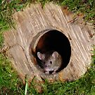 Mouse in a mossey hole by Simon-dell
