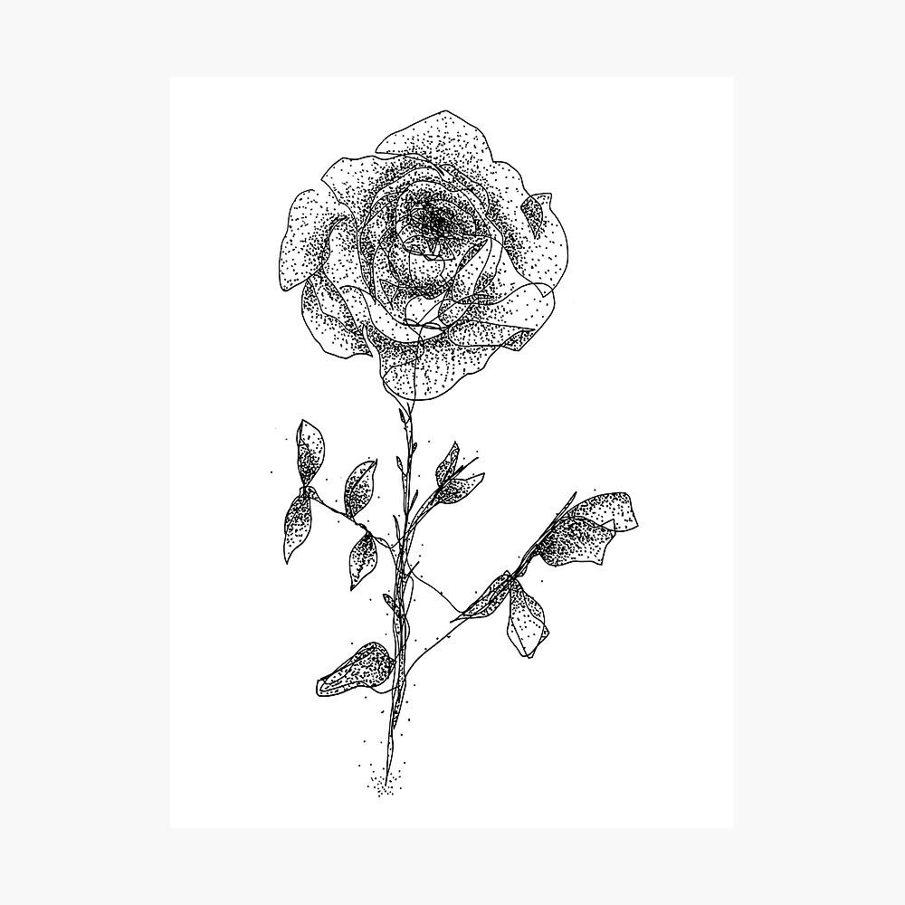 One Line Rose Fotodruck