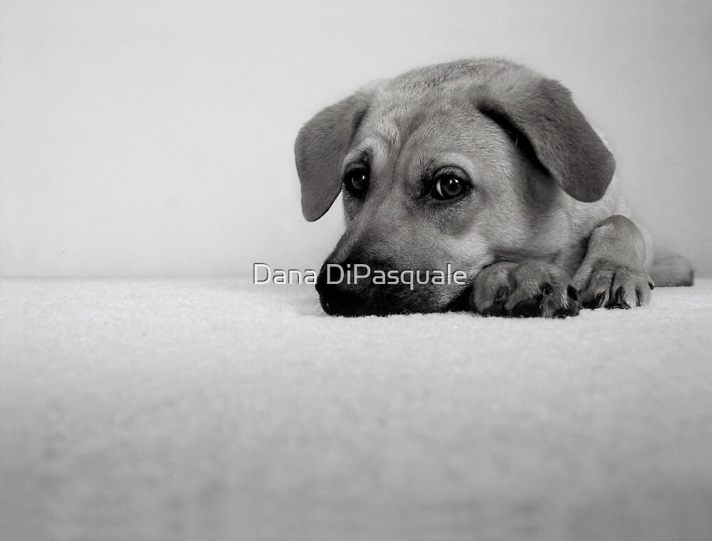 My Girl by Dana DiPasquale