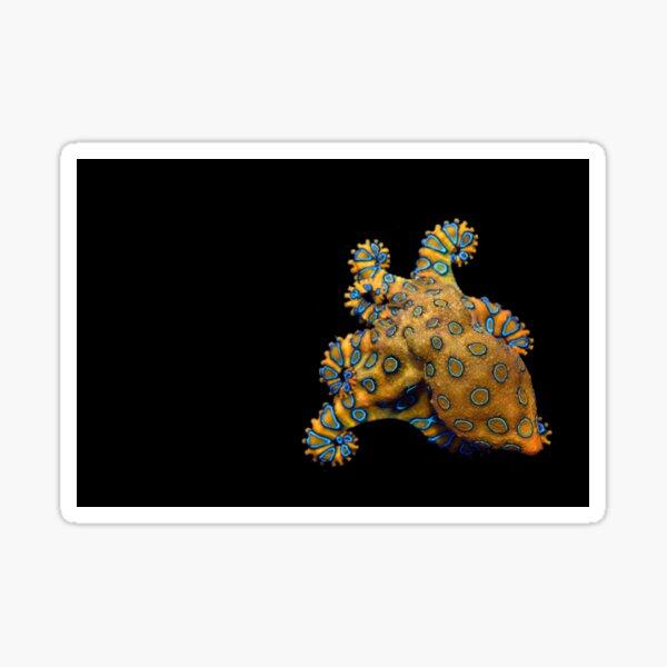 Blue Ring Octopus right skew  Sticker