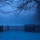 Gateway into another world, Dalkeith Country Park, Scotland by Michael Marten