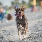 Someone Likes the Beach! by Peter O'Hara