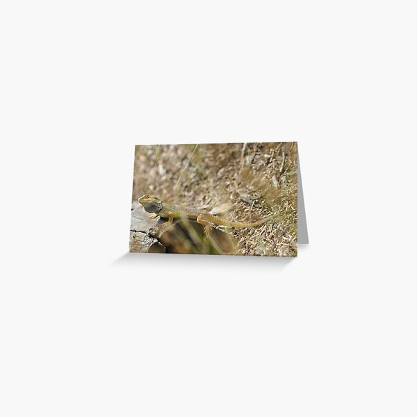 Western Bearded Dragon Greeting Card