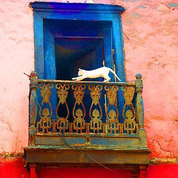 White Cat by erozzz