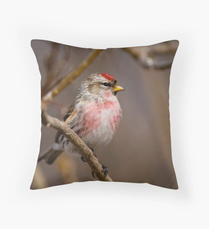 Male Common Redpoll - Shirley's Bay, Ottawa, Ontario Throw Pillow