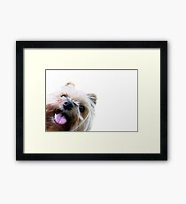 Silly Gracie (Hi Hello collection #1) Framed Print