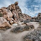 Joshua Tree National Park by toby snelgrove  IPA