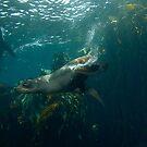 Aquatic K9 by MattTworkowski