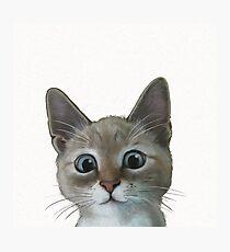 happy cat Photographic Print