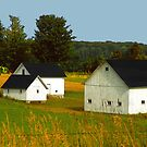 Leelanau Barn by Bob Fox