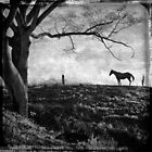 Solitary Horse by Carlos Restrepo