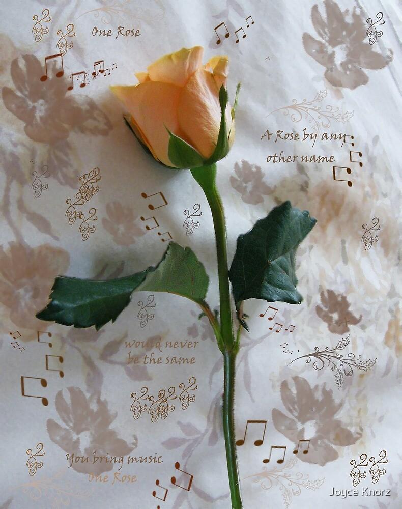 peach rose by Joyce Knorz