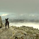 Tarn the Terrier... on Esk Pike by Jamie  Green