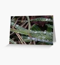 Life through Water Drops Greeting Card
