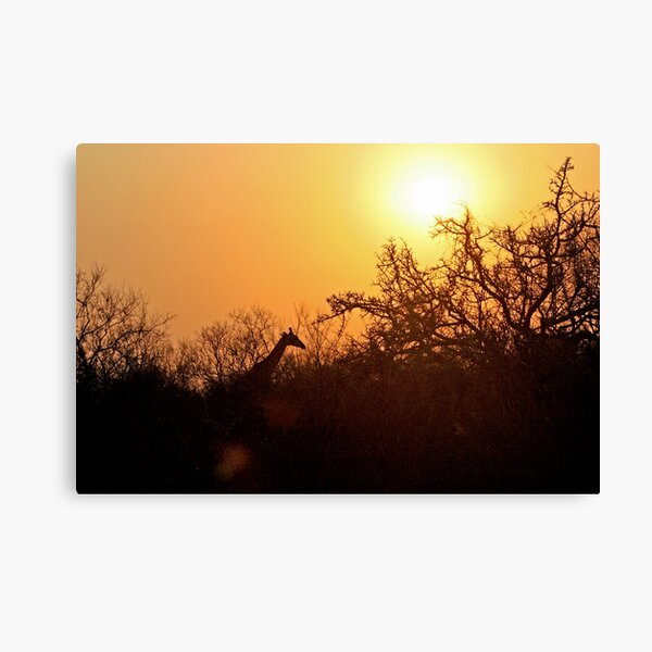 African Sunrise with Giraffe Canvas Print