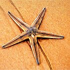 """""""PERFECT CREATION"""" - starfish in mozmbique by Magriet Meintjes"""