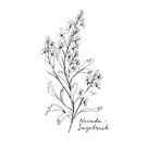 Nevada Sagebrush State Flower by Journey Home Made by JourneyHomeMade