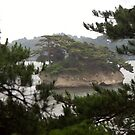 Matsushima Bay by Jennifer Chan