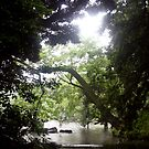 Hidden in Koishikawa Garden by Jennifer Chan