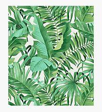 Green tropical leaves II Photographic Print