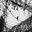 Bird on a Wire by RodriguezArts