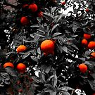 Oranges in Seville, Spain by Seller2018KF