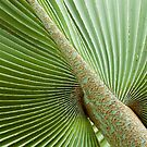 Palm Textures by Dilshara Hill